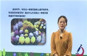 初二生物下学期同步课(人教版)(m)